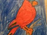 Kaja-papuga